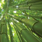 Photocredit: http://prabhujisgifts.info/7-reasons-why-bamboo-is-perfect-in-incense-sticks/